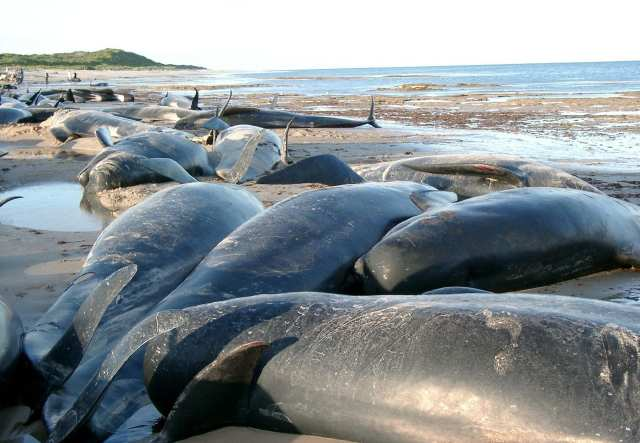 Haga clic aqui para aprender sobre cómo el ruido del océano heco por el hombre.