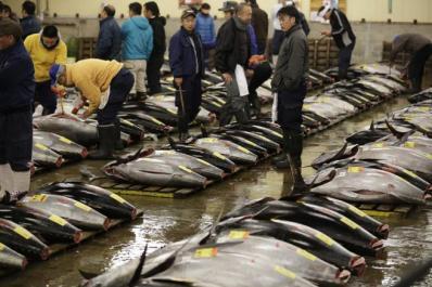 bluefin-tuna-la-sobrepesca-amenaza-la-poblacion-del-atun-rojo-foto-eugene-hoshiko-ap