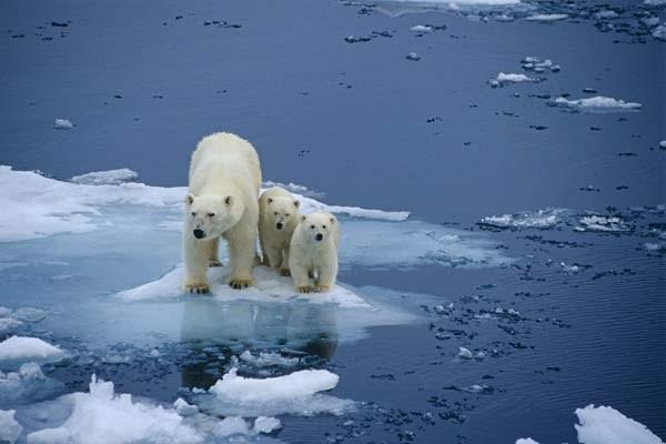 Haga clic aqui para aprender sobre cómo el Cambio climático amenaza la vida en nuestros océanos y en la tierra.