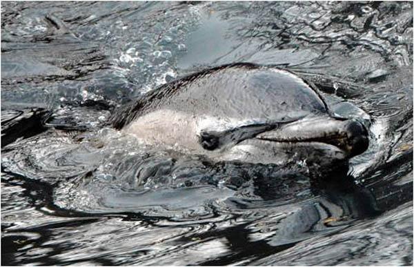 Haga clic aqui para aprender sobre cómo los residuos tóxicos contaminan nuestros océanos y canales.